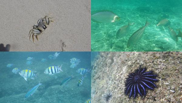 ピピ島でシュノーケリングして見た海の中の魚やカニやヒトデ