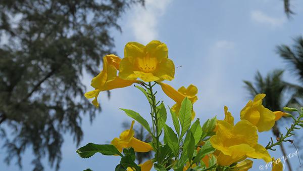 強い日差しの中に咲く南国の花