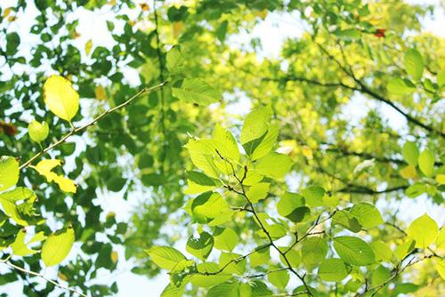 ナチュラルハーモニーによる緑の葉の見え方